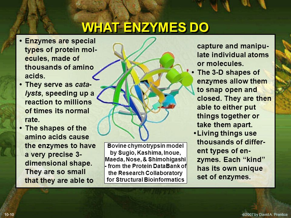 WHAT ENZYMES DO • Enzymes are special types of protein mol-ecules, made of thousands of amino acids.