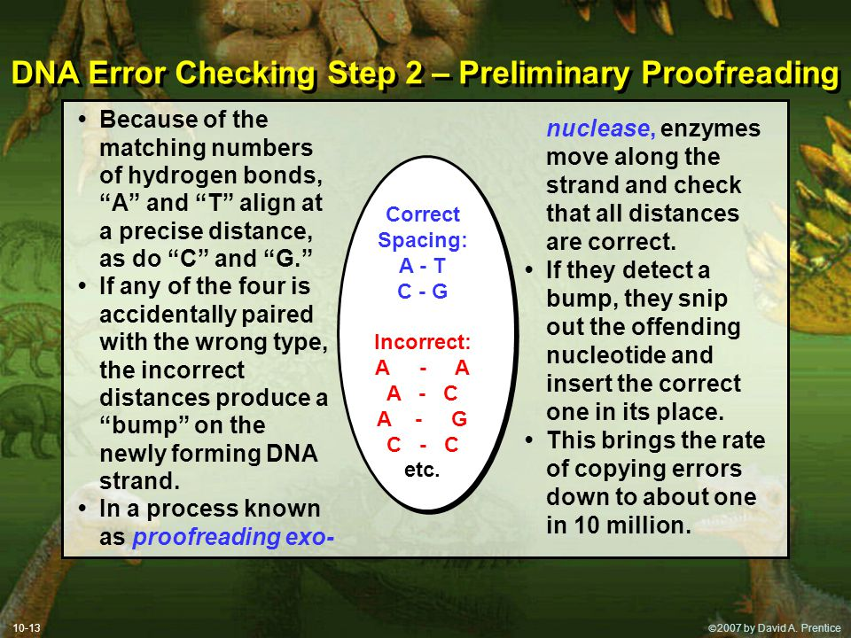 DNA Error Checking Step 2 – Preliminary Proofreading