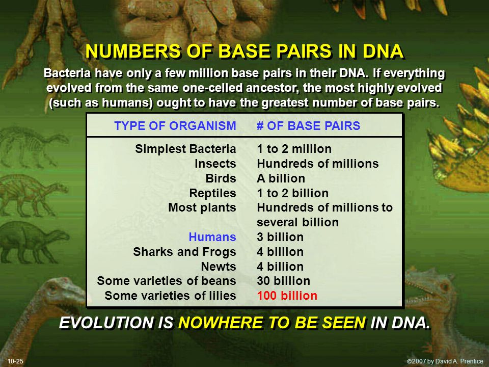 NUMBERS OF BASE PAIRS IN DNA