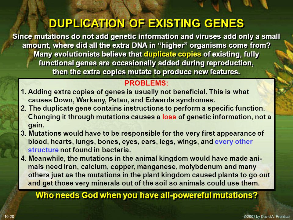 DUPLICATION OF EXISTING GENES