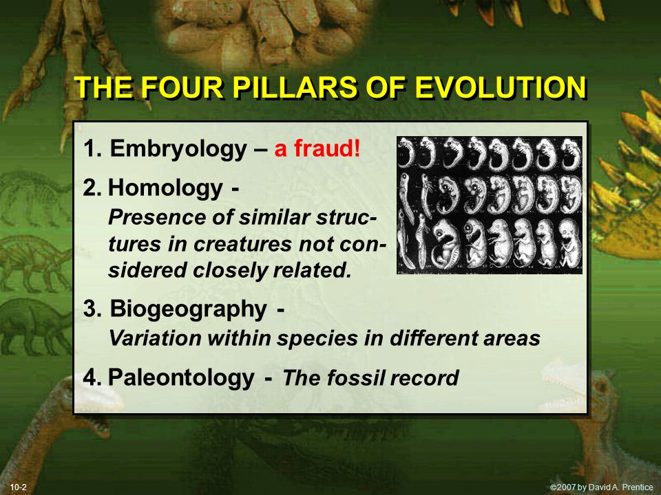 THE FOUR PILLARS OF EVOLUTION