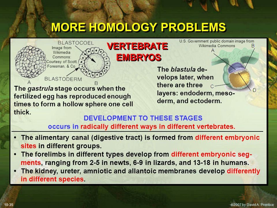 MORE HOMOLOGY PROBLEMS