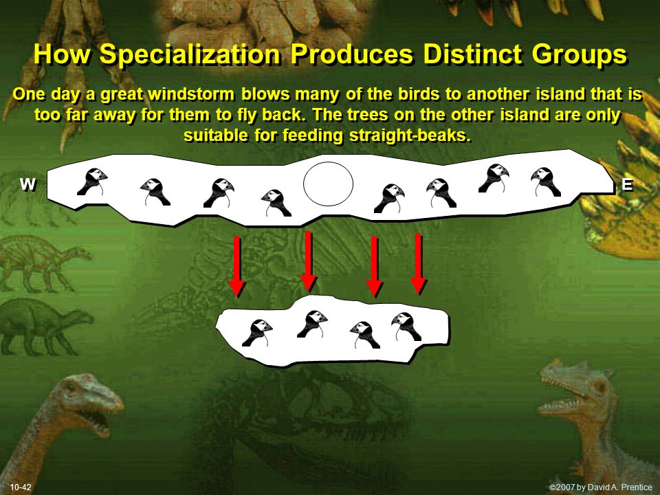 How Specialization Produces Distinct Groups