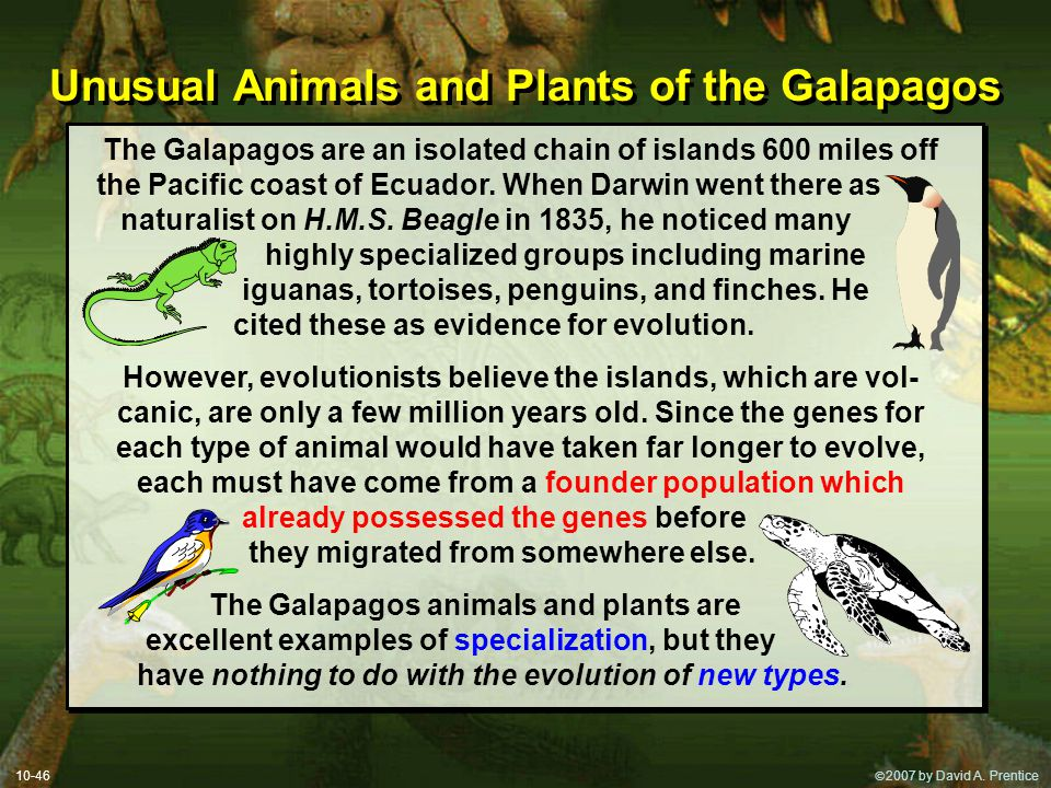Unusual Animals and Plants of the Galapagos