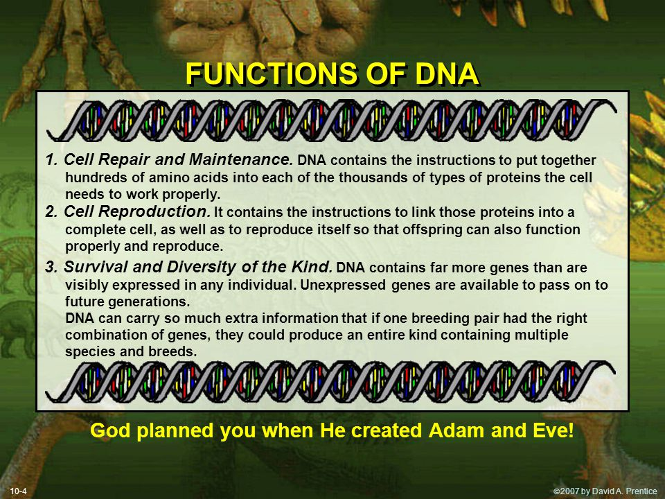 God planned you when He created Adam and Eve!