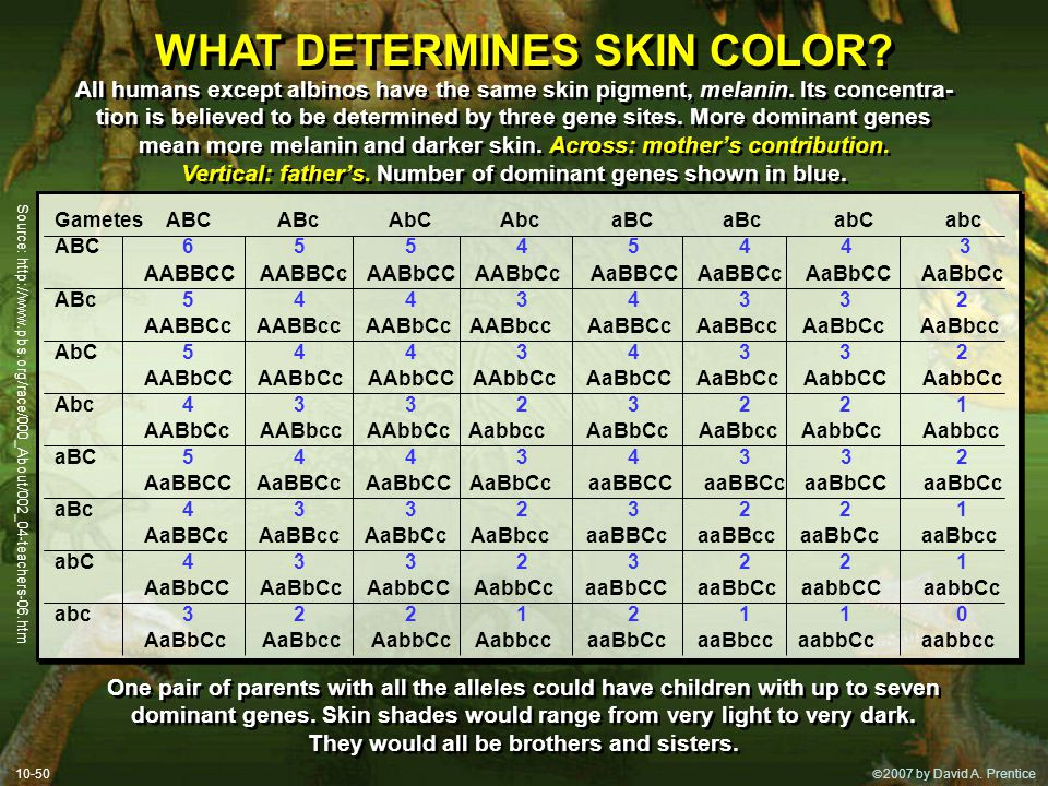 WHAT DETERMINES SKIN COLOR