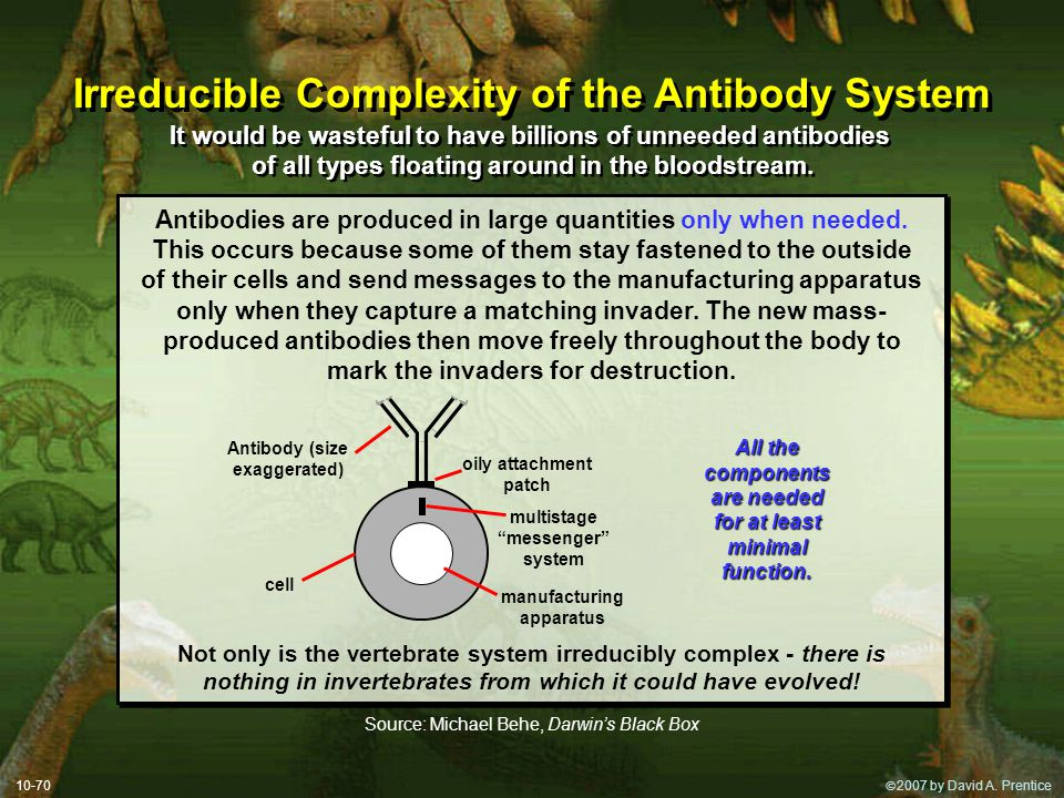 Irreducible Complexity of the Antibody System