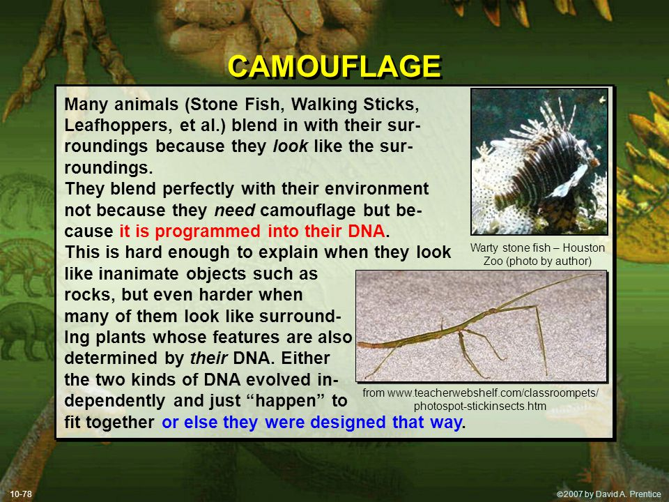 CAMOUFLAGE Many animals (Stone Fish, Walking Sticks,