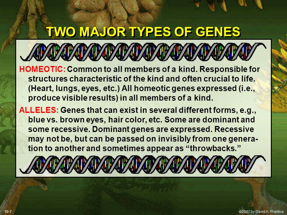TWO MAJOR TYPES OF GENES