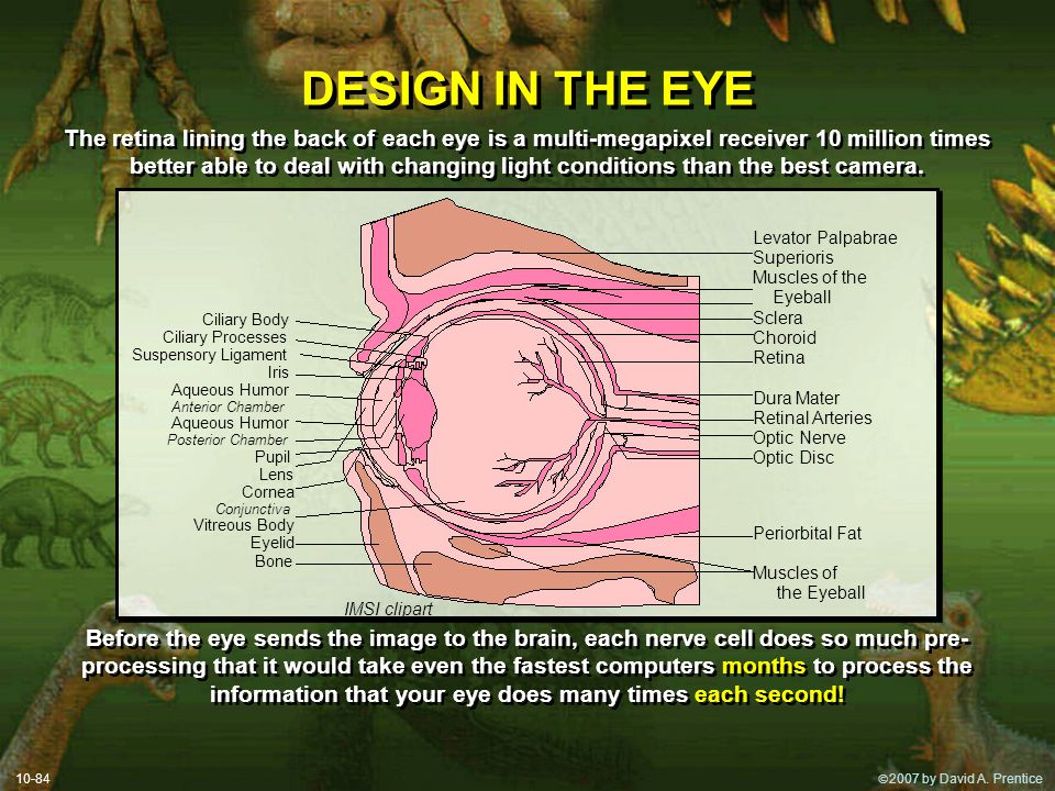DESIGN IN THE EYE
