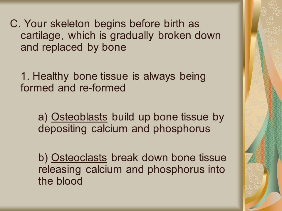 C. Your skeleton begins before birth as cartilage, which is gradually broken down and replaced by bone