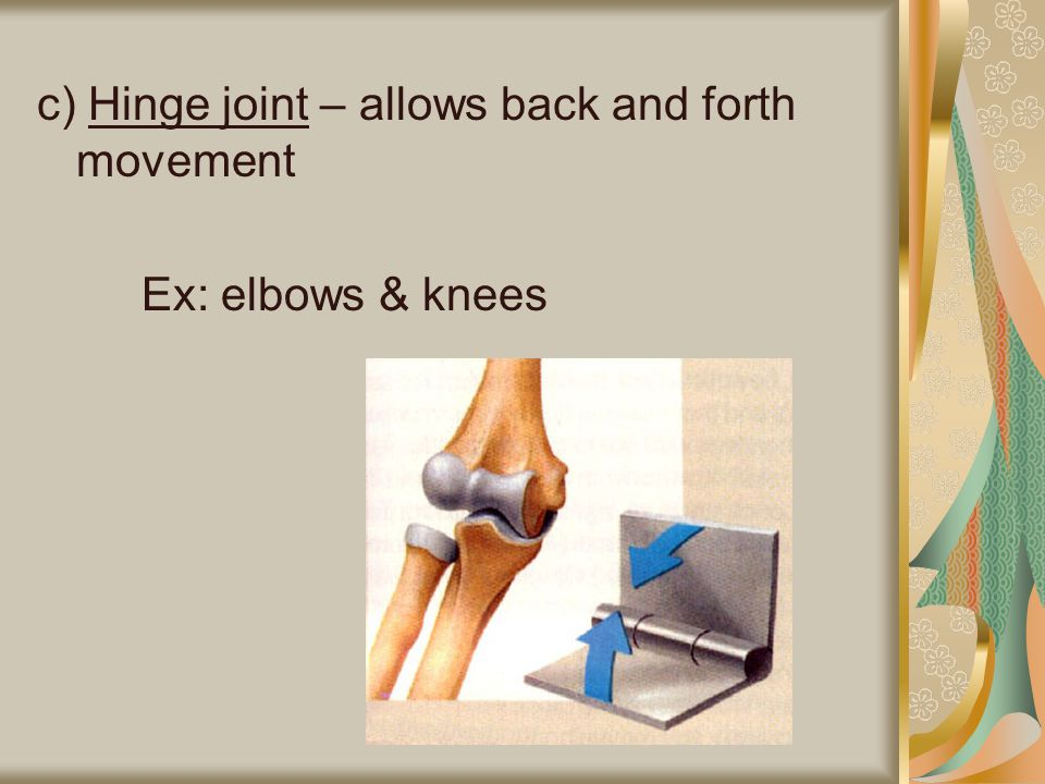 c) Hinge joint – allows back and forth movement