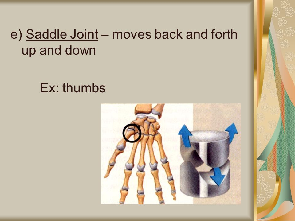 e) Saddle Joint – moves back and forth up and down