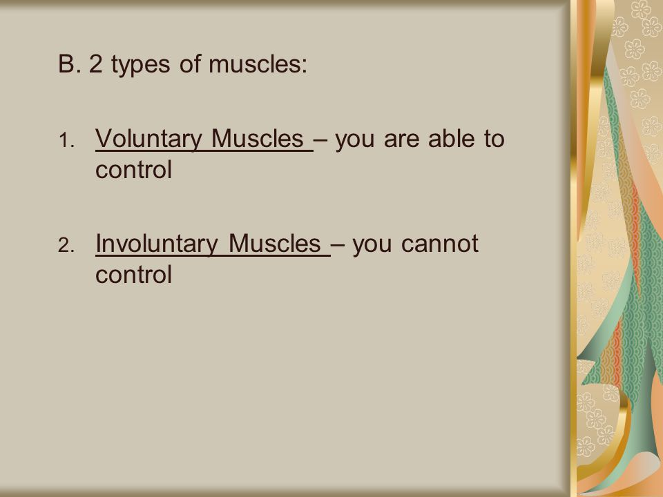 B. 2 types of muscles: Voluntary Muscles – you are able to control.