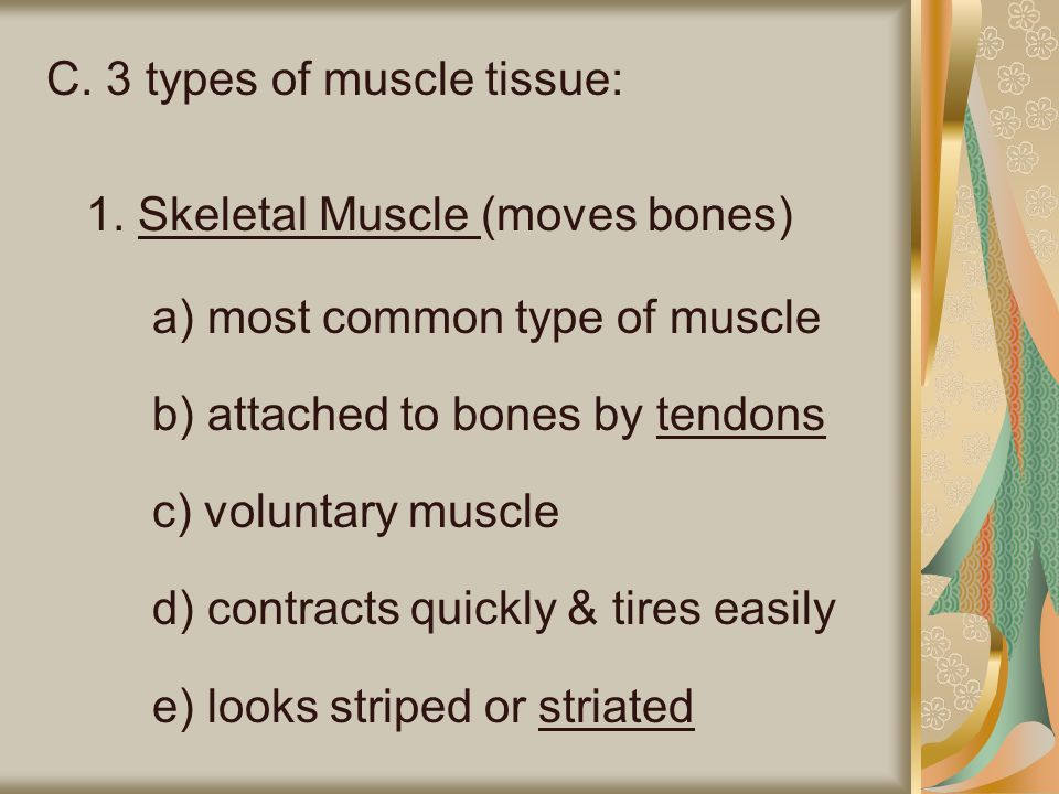 C. 3 types of muscle tissue: 1