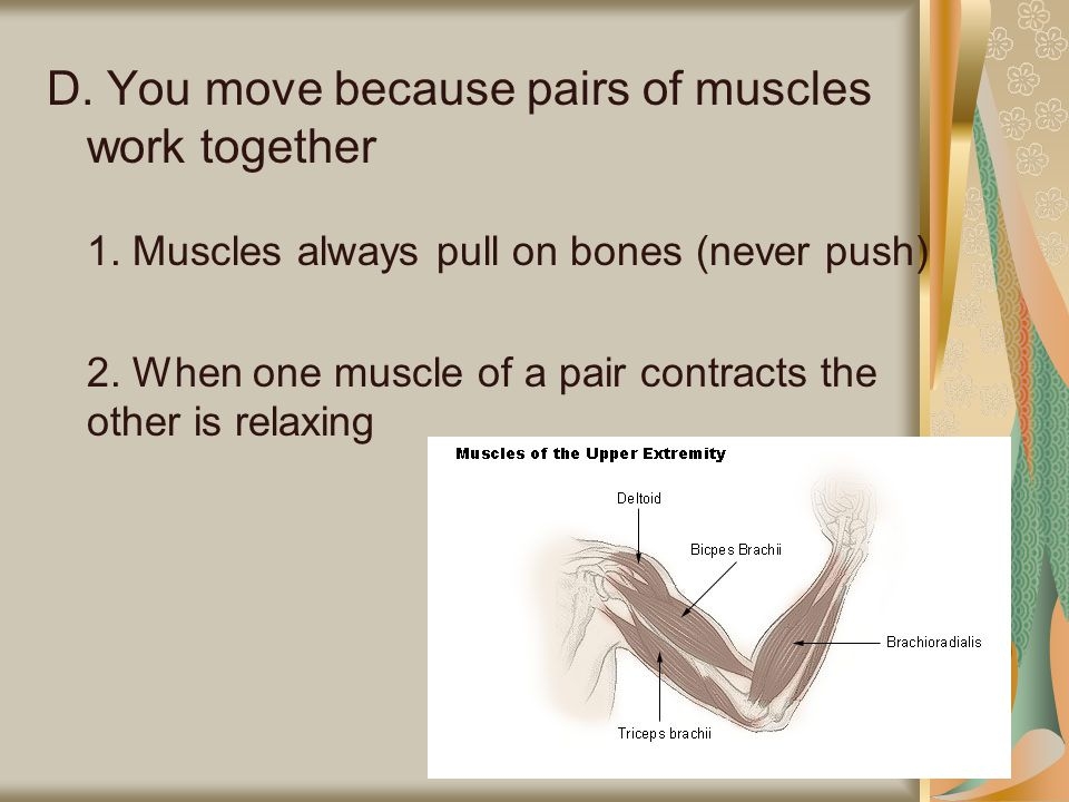 D. You move because pairs of muscles work together