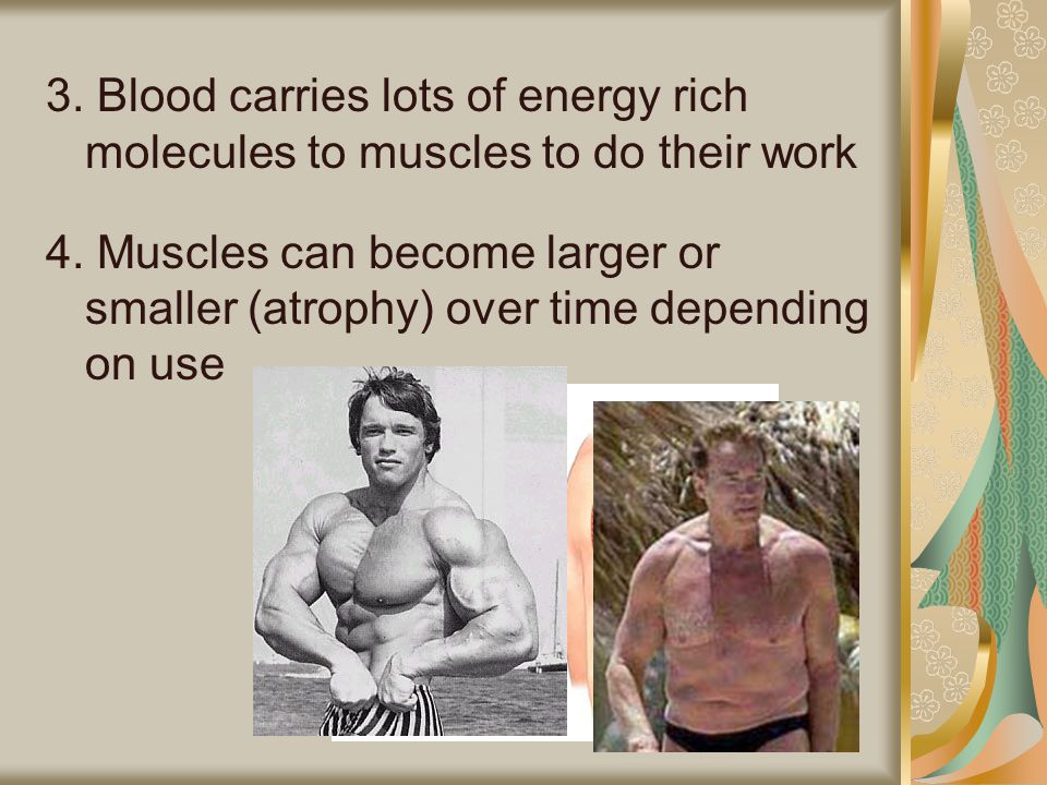 3. Blood carries lots of energy rich molecules to muscles to do their work 4.