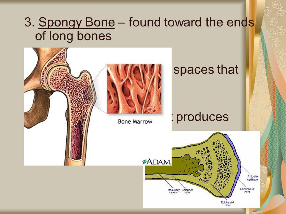 3. Spongy Bone – found toward the ends of long bones