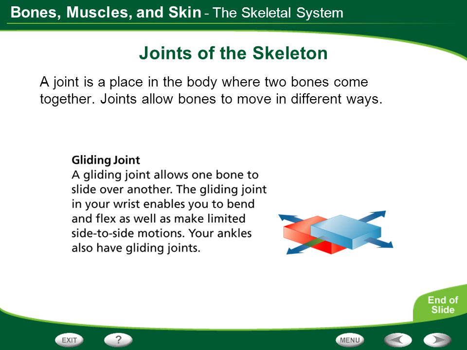 Joints of the Skeleton - The Skeletal System
