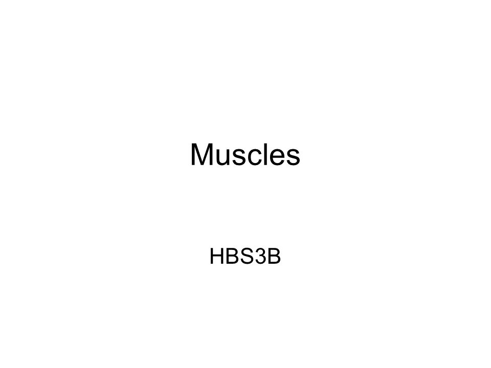 Muscles HBS3B