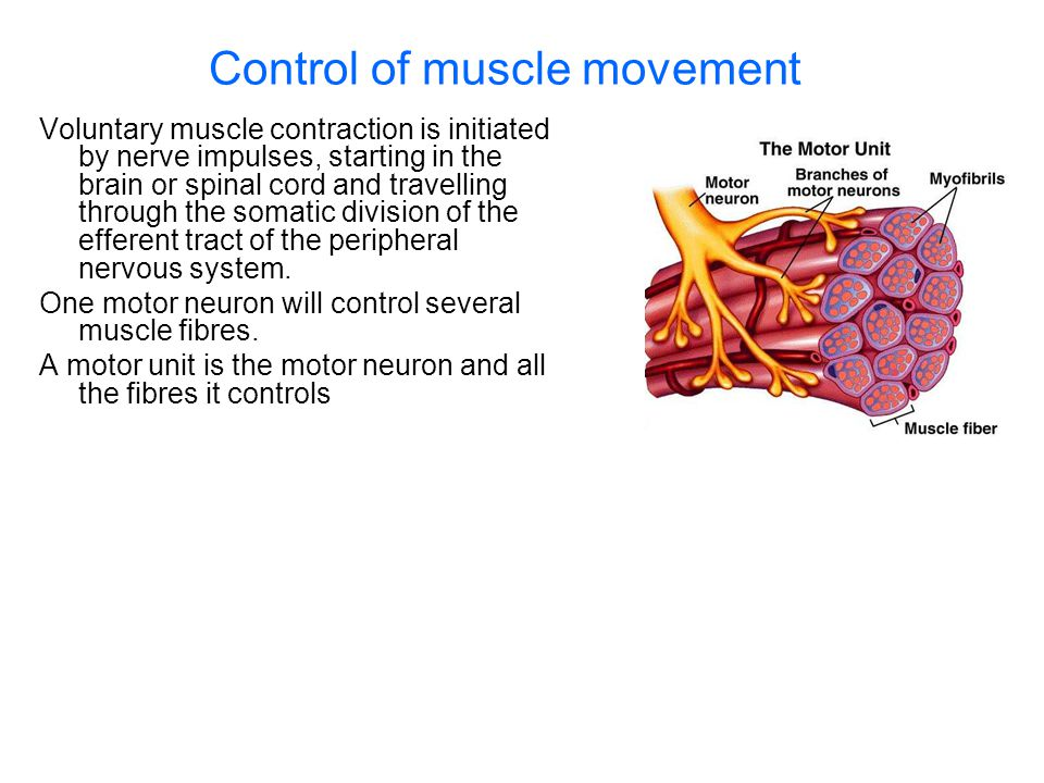 Control of muscle movement