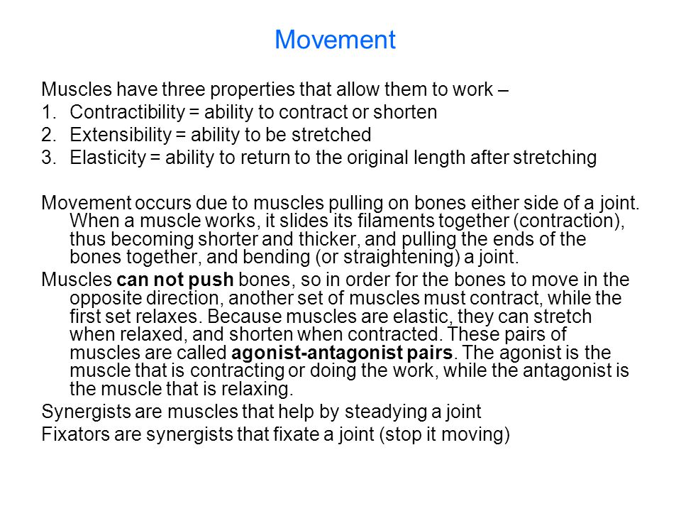 Movement Muscles have three properties that allow them to work –