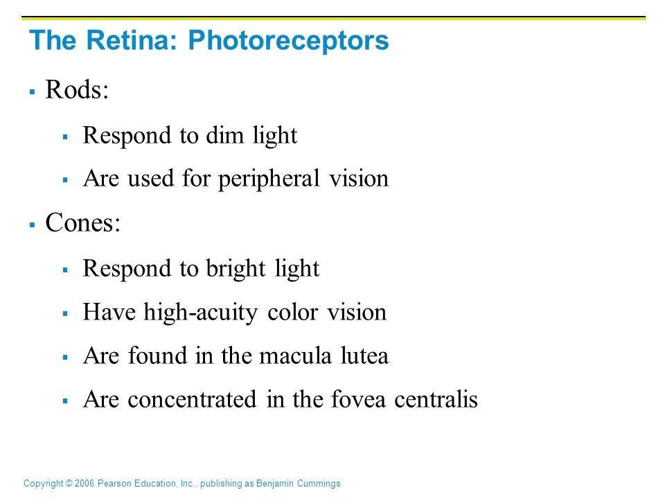 The Retina: Photoreceptors