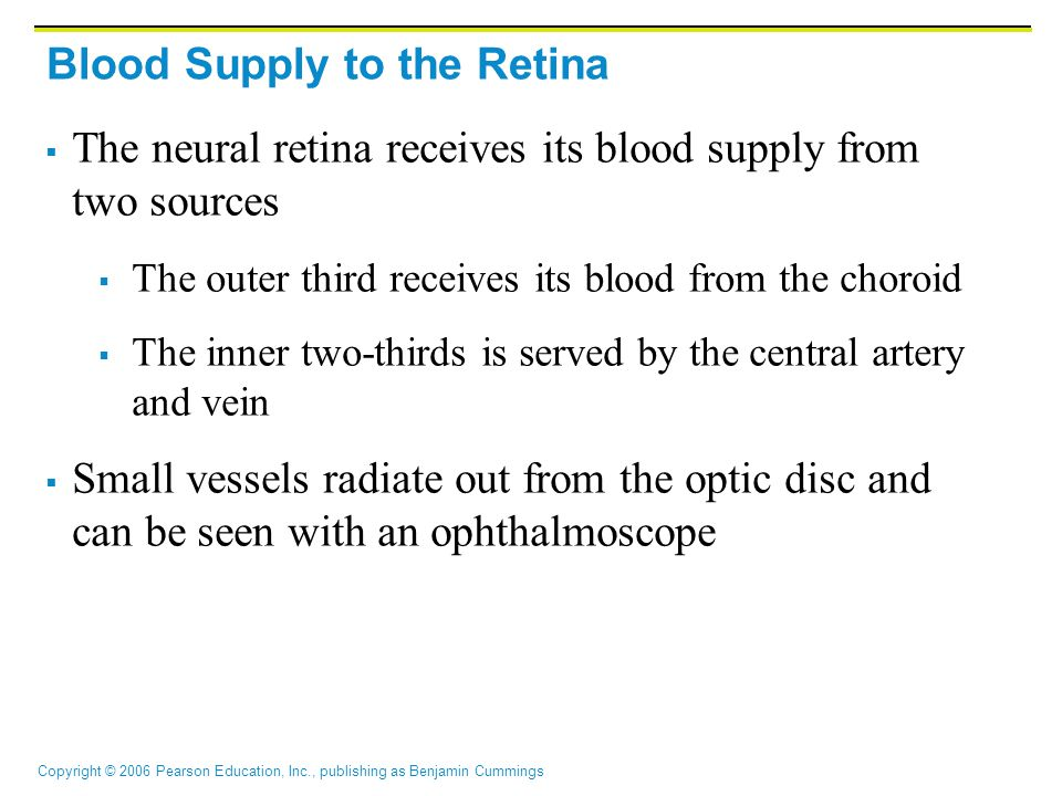 Blood Supply to the Retina