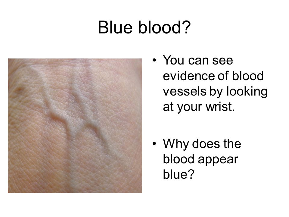 Blue blood. You can see evidence of blood vessels by looking at your wrist.