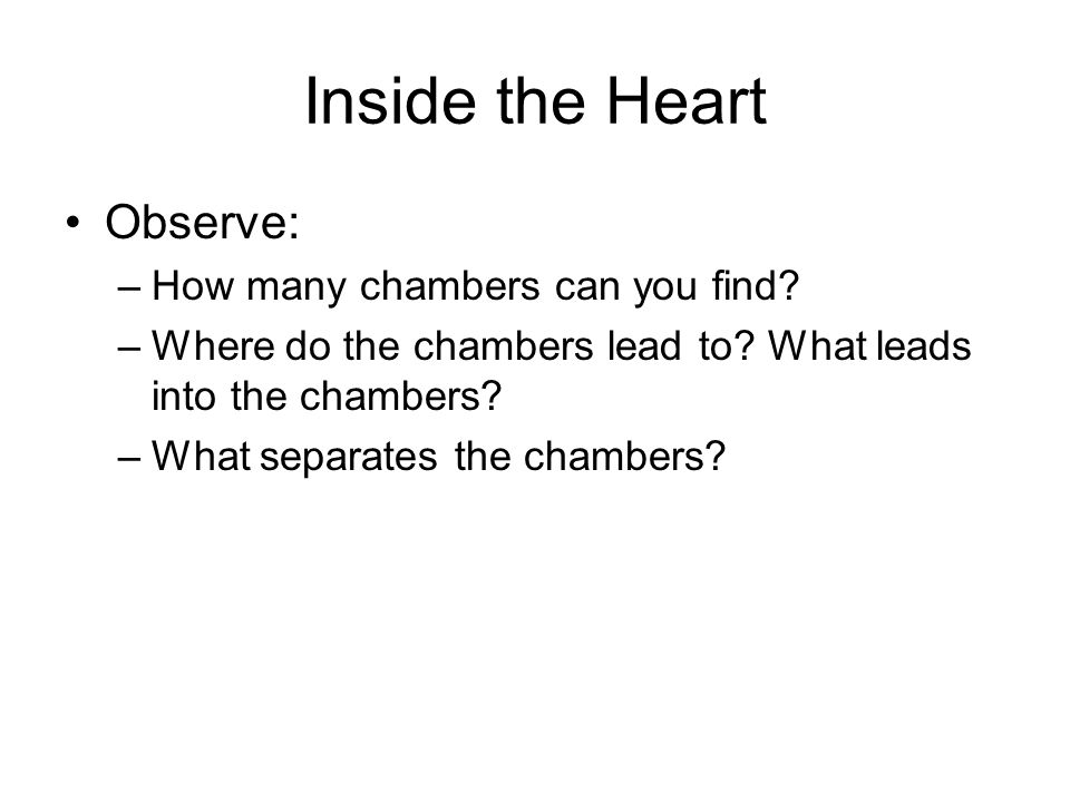 Inside the Heart Observe: How many chambers can you find