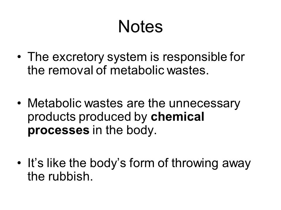 Notes The excretory system is responsible for the removal of metabolic wastes.