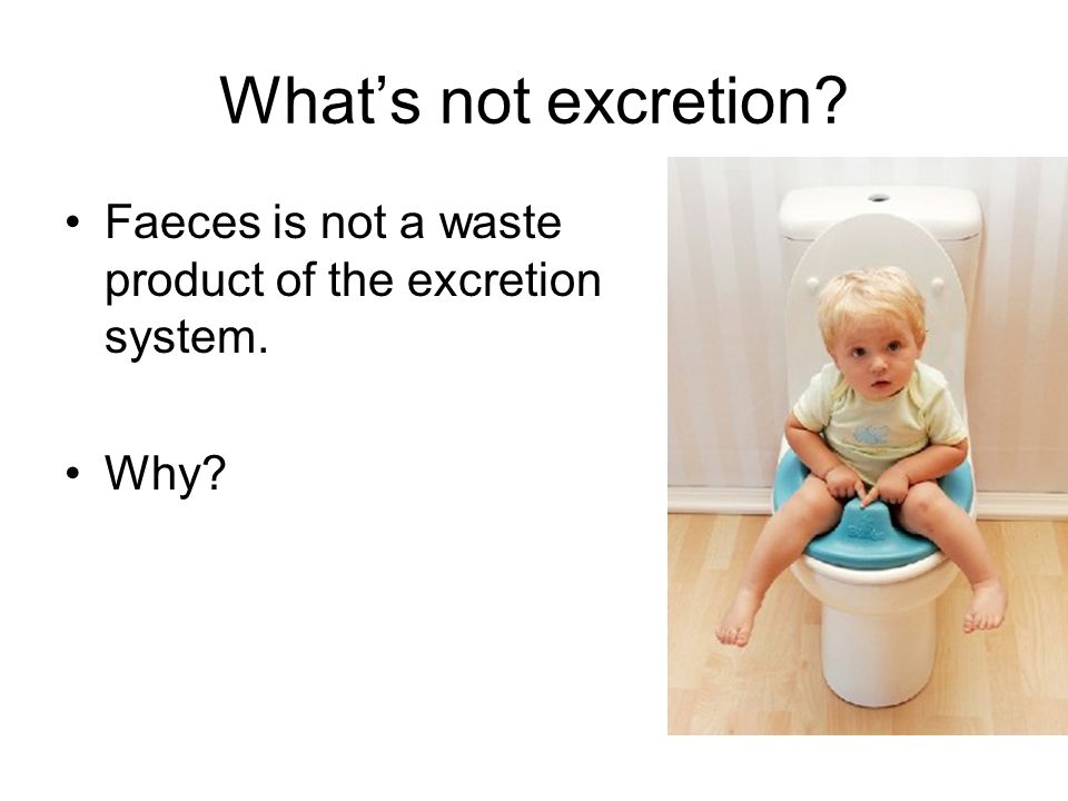 What's not excretion Faeces is not a waste product of the excretion system. Why