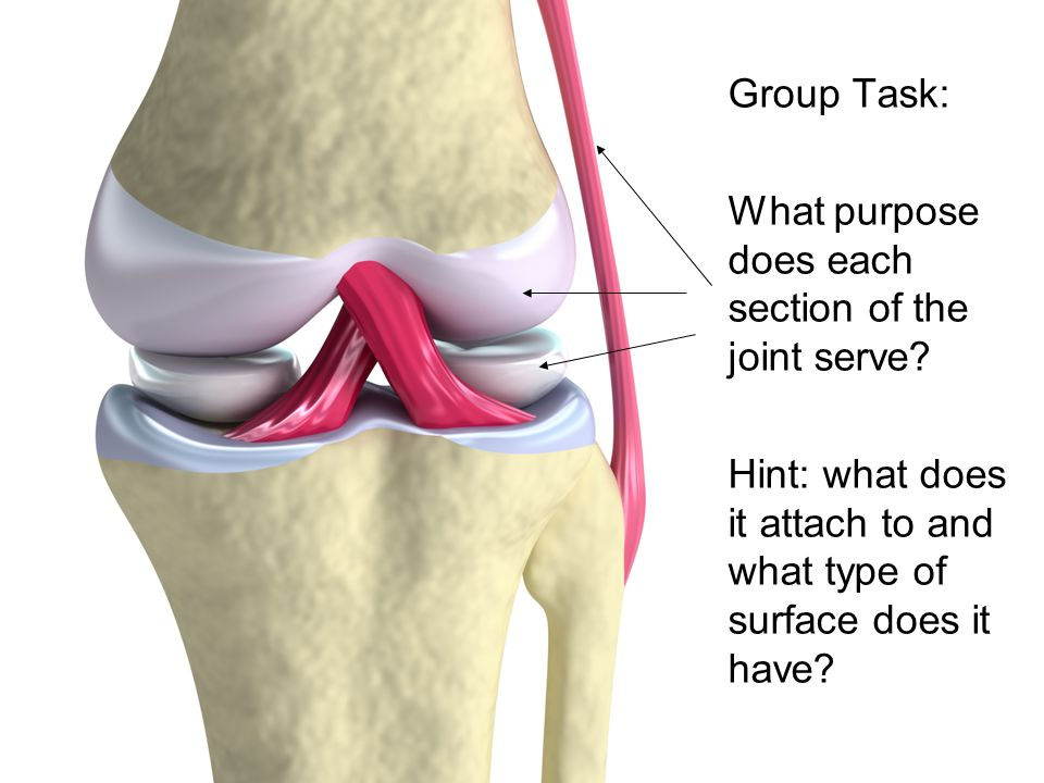 Task Group Task: What purpose does each section of the joint serve