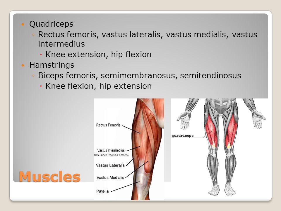Quadriceps Rectus femoris, vastus lateralis, vastus medialis, vastus intermedius. Knee extension, hip flexion.