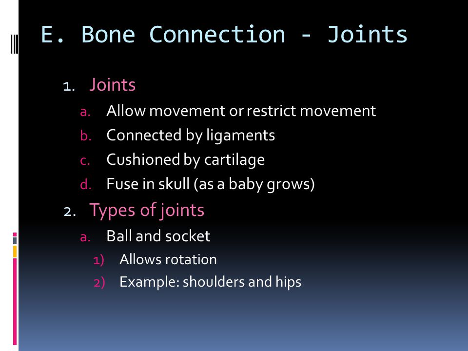 E. Bone Connection - Joints