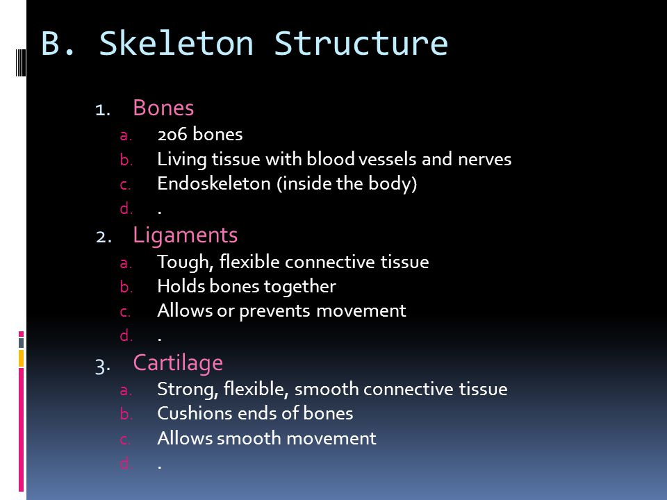 B. Skeleton Structure Bones Ligaments Cartilage 206 bones