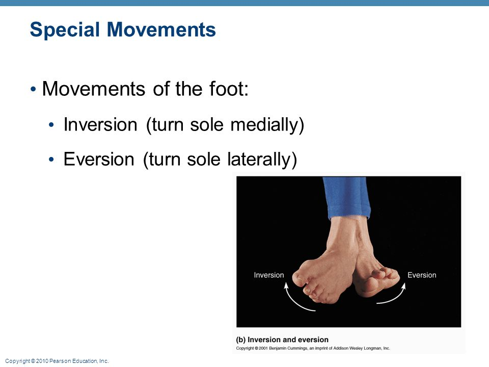 Special Movements Movements of the foot: