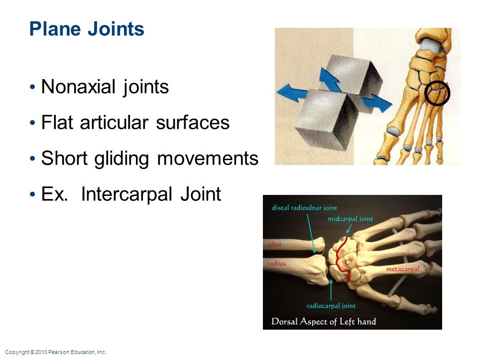 Plane Joints Nonaxial joints Flat articular surfaces Short gliding movements Ex. Intercarpal Joint
