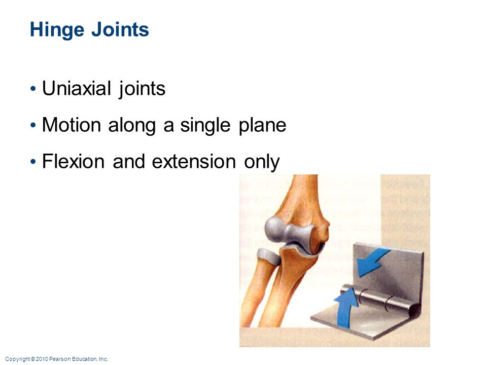 Hinge Joints Uniaxial joints Motion along a single plane Flexion and extension only