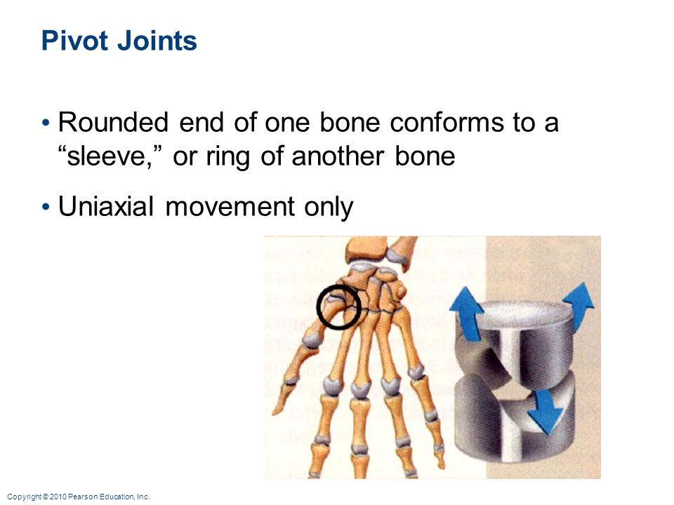 Pivot Joints Rounded end of one bone conforms to a sleeve, or ring of another bone.