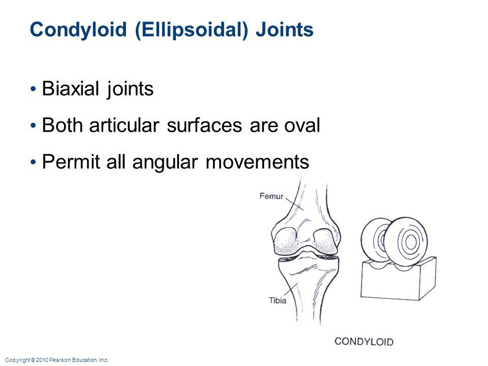 Condyloid (Ellipsoidal) Joints