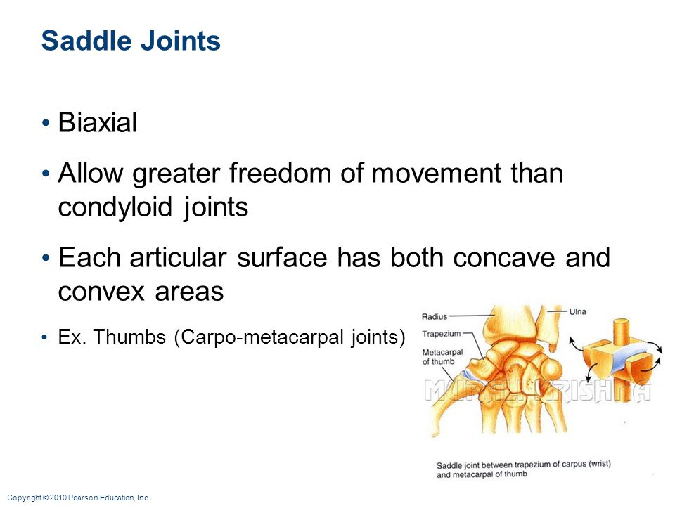 Allow greater freedom of movement than condyloid joints