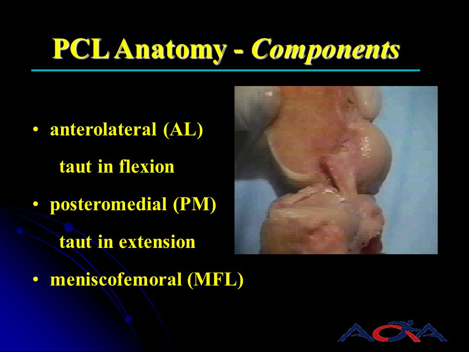 PCL Anatomy - Components