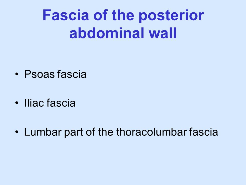 Fascia of the posterior abdominal wall