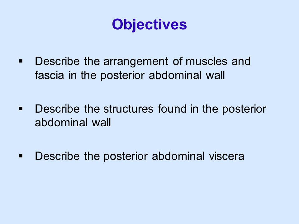 Objectives Describe the arrangement of muscles and fascia in the posterior abdominal wall.