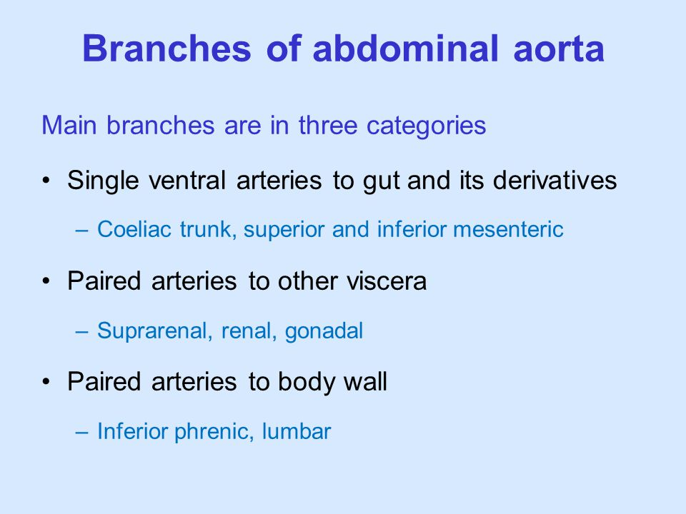 Branches of abdominal aorta