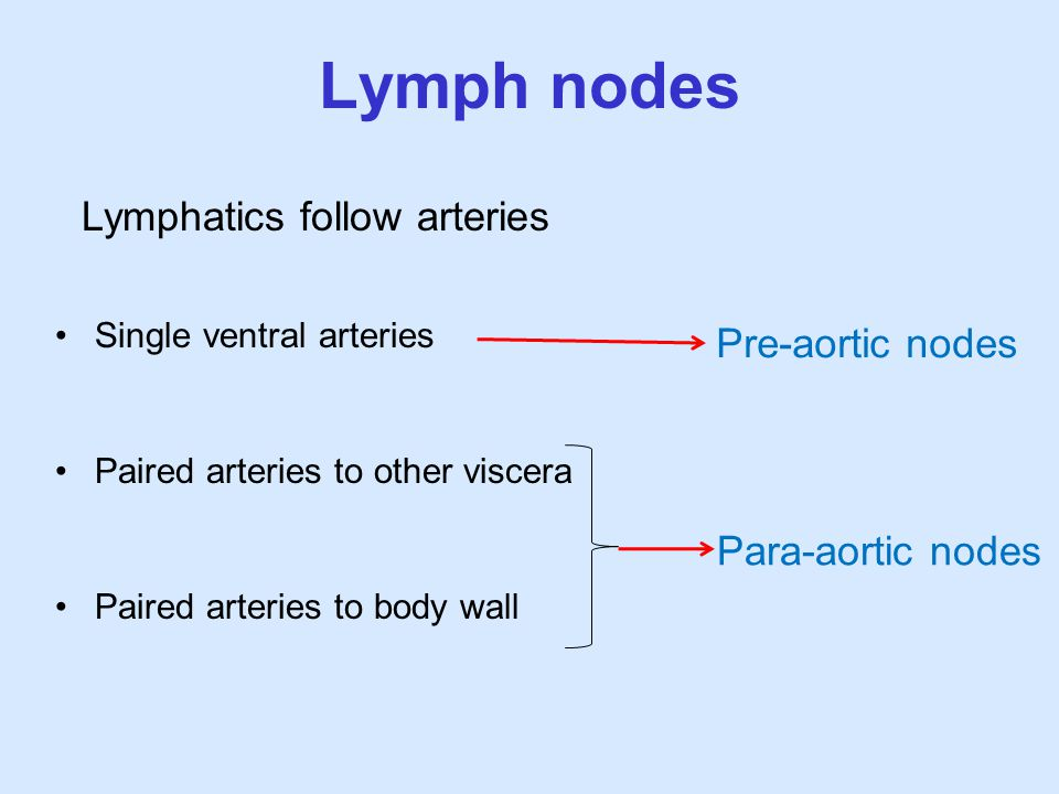 Lymph nodes Lymphatics follow arteries Pre-aortic nodes