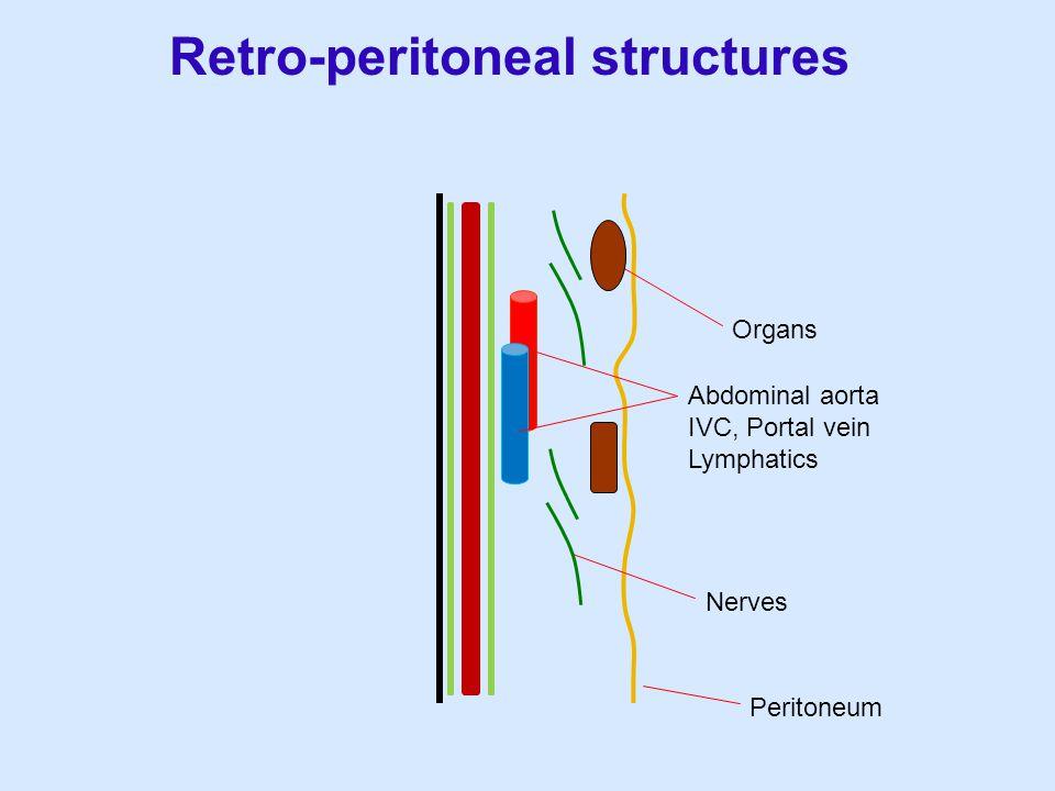 Retro-peritoneal structures