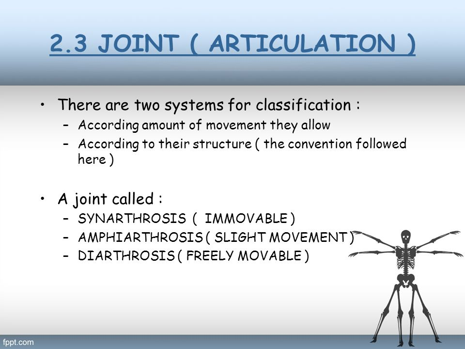 2.3 JOINT ( ARTICULATION ) There are two systems for classification :