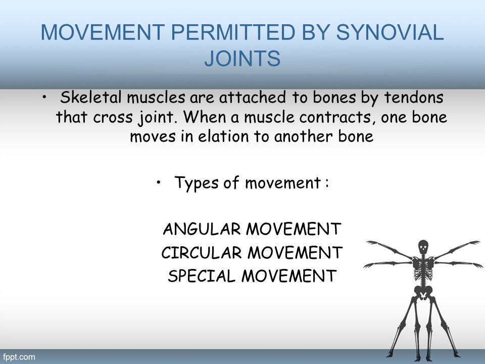 MOVEMENT PERMITTED BY SYNOVIAL JOINTS